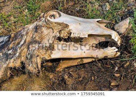 死んだ 動物 毛皮 かわいい 野生動物 ほ乳類 ストックフォト © njnightsky