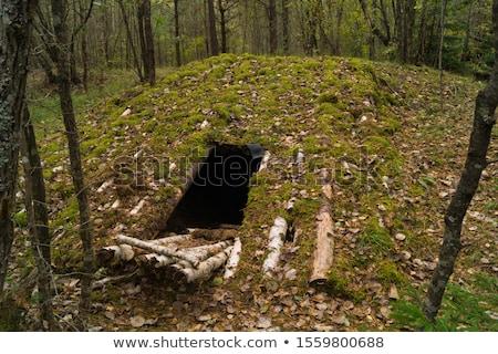 Létra földalatti öreg fából készült idő első Stock fotó © tracer