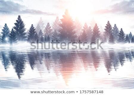 Hiver sapin forêt paysage arbres neige Photo stock © Kotenko