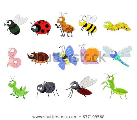 Cartoon насекомые Cute саду животные животного Сток-фото © mumut