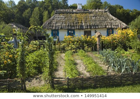 Cabaña vegetales jardín ilustración edificio Foto stock © colematt