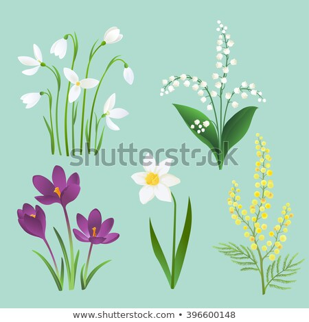 set of crocus spring flowers collection violet and yellow stock photo © margolana
