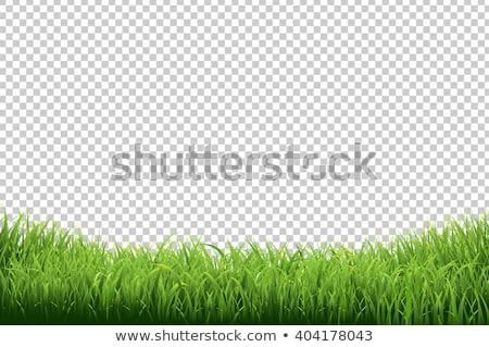 Hierba verde frontera establecer transparente hierba naturaleza Foto stock © olehsvetiukha