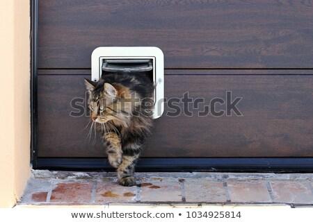 Alle katten mooie cute kat illustratie Stockfoto © zsooofija