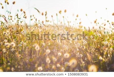 Lapin herbe lumière vintage style image Photo stock © tilo