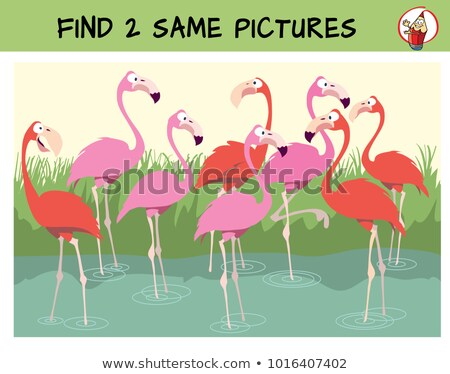Find Two Same Wild Animals Coloring Book Vector Illustration