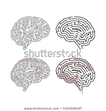 Dwa skomplikowany mózgu czerwony ścieżka Zdjęcia stock © evgeny89