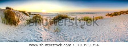 Areia da praia duna areia branca grama mar verão Foto stock © HerrBullermann