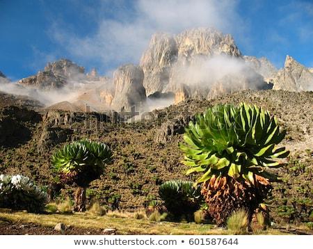Kenia Afryki wiosną krajobraz górskich Zdjęcia stock © Anna_Om