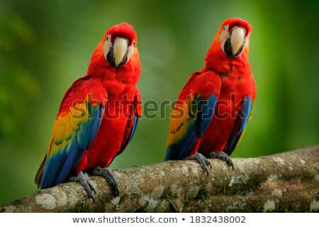macaw sitting stock photo © witthaya
