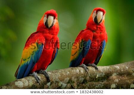 Vergadering kleurrijk boom vogel groene praten Stockfoto © Witthaya