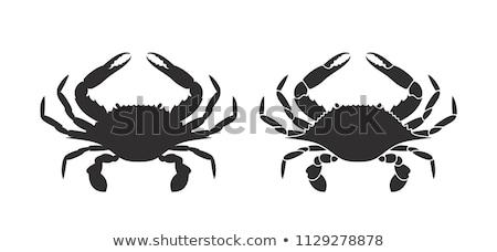 żyć · Krab · plaży · tekstury · morza - zdjęcia stock © devon