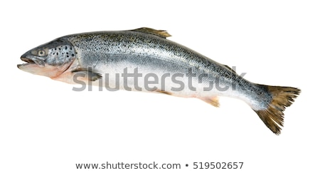 close up of Fish isolated on white Stock photo © shutswis