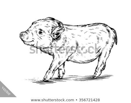 Сток-фото: Piglets In Pen