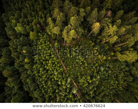 Fall Skies in the North Woods Stock photo © wildnerdpix