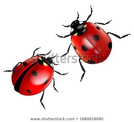 Legal Beetle Stock photo © blamb