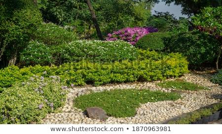 backyard decorated with stones stock photo © taden
