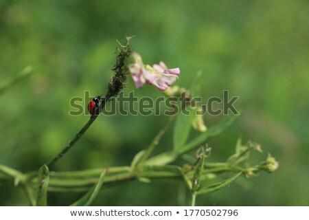 Beszél bogár színes rajz illusztráció vektor Stock fotó © derocz
