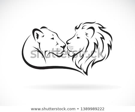 Female lion Stock photo © badmanproduction