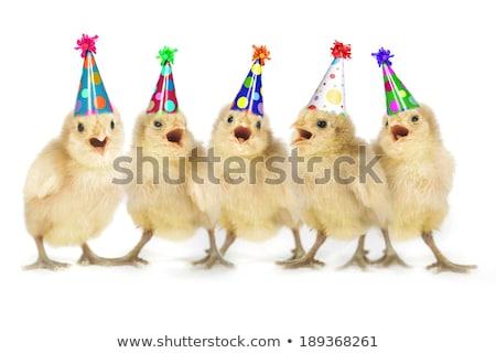 Cute Yellow Baby Chicks Lined Up Singing Stock photo © tobkatrina