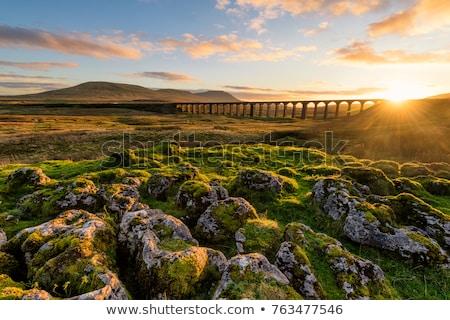 Yorkshire pastoral ağaç dağ kaya yıpranmış Stok fotoğraf © chris2766