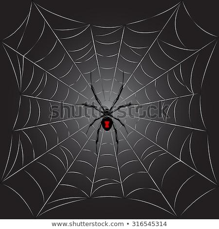 Black Widow spider sketches Stock photo © retrostar