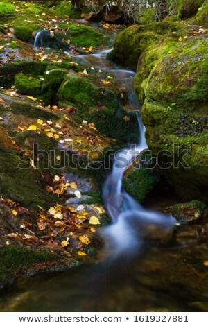 piedra · cubierto · musgo · agua · paisaje · fondo - foto stock © igabriela