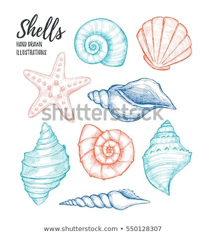mar · conchas · conjunto · preto · starfish - foto stock © loopall