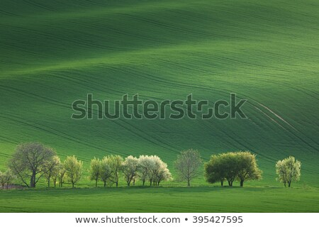 Narural landscape of Green and Blossom Trees overlooking rolling Stock photo © Taiga