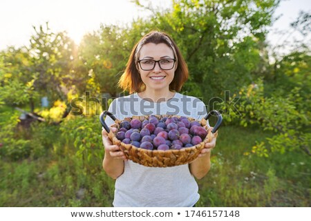 Stockfoto: Groeiend · pruimen · groene · bladeren · voedsel · vruchten · zomer
