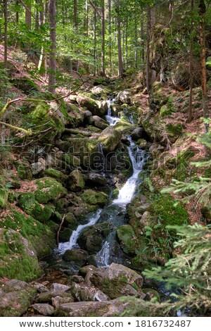 森林 ストリーム 山 美しい 草 自然 ストックフォト © Avlntn