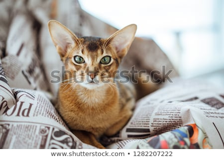 Cat and Beanbag Stock photo © HASLOO