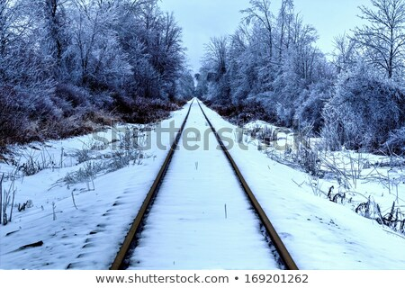 Railroad Tracks in a Remote Wilderness Stock photo © wildnerdpix