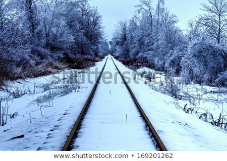 railroad tracks in a remote wilderness stock photo © wildnerdpix