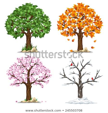 Négy évszak fa fű levél kert naptár Stock fotó © carodi