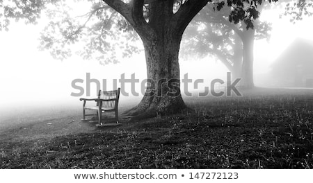 Bench in white landscape Stock photo © hraska
