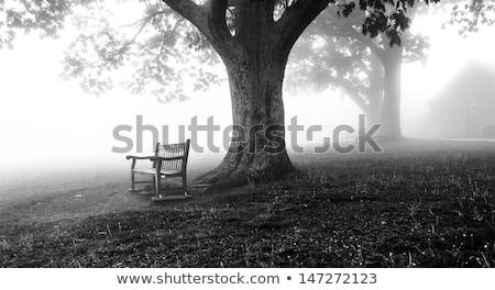 ławce biały krajobraz bezlistny drzew Zdjęcia stock © hraska
