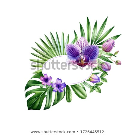 Oval banner with orchids Stock photo © blackmoon979
