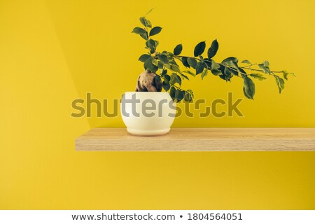 white cup on green yellow background solid Stock photo © 7Crafts
