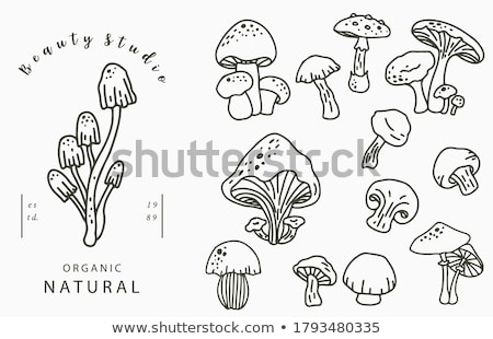 Mushrooms: Champignons mushroons Stock photo © user_11224430