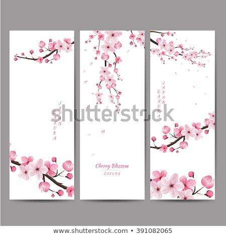 Primavera sakura sem costura páscoa flor feliz Foto stock © carodi