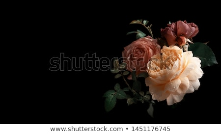 Still life with autumn flowers Stock photo © master1305