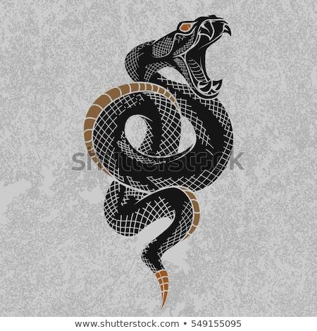 króla · kobra · wektora · projektu · malarstwo · węża - zdjęcia stock © krisdog
