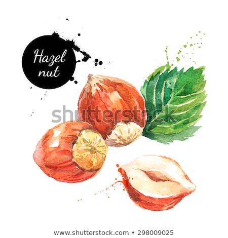 watercolor illustration of hazelnut stock photo © sonya_illustrations