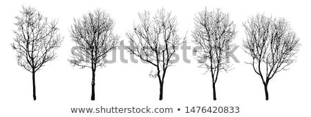 клен дерево парка дождливый осень Сток-фото © stevanovicigor