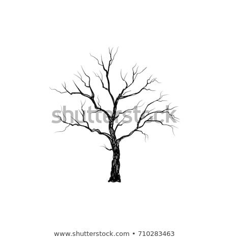 Stockfoto: Boom · bladeren · natuur · teken · winter