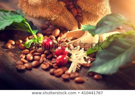 Café planta ramo folha baga grão de café Foto stock © frescomovie