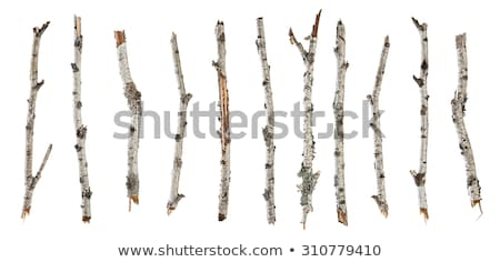 Rotten birch trunks Stock photo © Mps197
