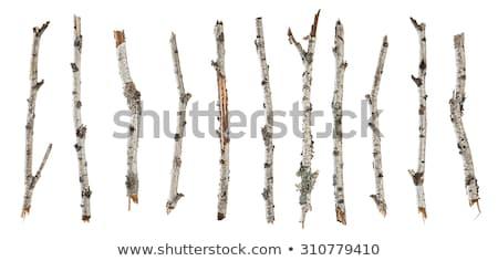 huş · ağacı · orman · ağaçlar - stok fotoğraf © Mps197