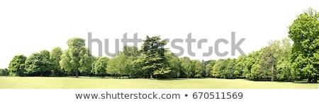 Stock photo: Green Nature Landscape Isolated White Background